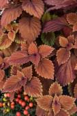 Fényképek felülnézet, szép világos narancs és a barna levelek: virágbolt