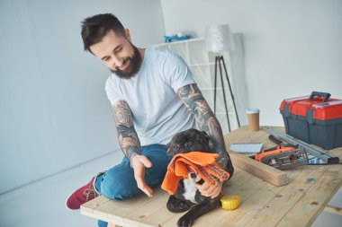 tattooed man playing with french bulldog with protective gloves on wooden surface in new apartment