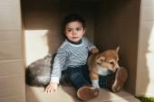 Veselé dítě s přátelský pes a kočka v krabici