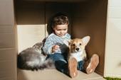 Fotografie chlapeček s roztomilý kočka a pes sedí v krabici slunečním záření