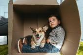 Selektivní fokus welsh corgi Pembroke sedí s malým chlapcem v krabici