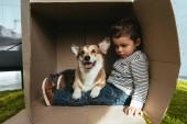 rozkošný welsh corgi pembroke sedí s malým chlapcem v krabici