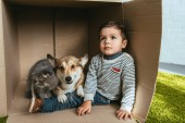 chlapeček s welsh corgi pembroke a britská dlouhosrstá kočka sedí v krabici