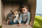 Fotografie Kind mit entzückenden Corgi und britische Langhaarkatze sitzen im Karton