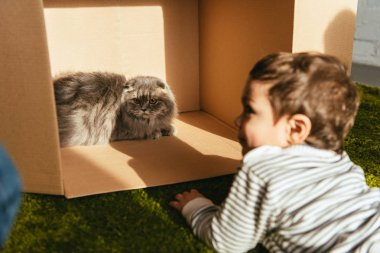 Selective focus of little smiling boy laying near british longhair cat in cardboard box at home stock vector