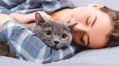 Photo close-up view of girl sleeping on bed with british shorthair cat