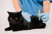 oříznutý pohled veterinárního lékaře, držte stříkačku poblíž černá kočka před zákrokem microchipping izolované Grey