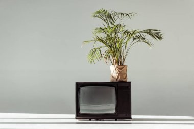 Green plant in pot on vintage tv on grey background stock vector