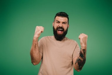 excited bearded man gesturing and screaming isolated on green