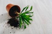 Fotografie Fotografie padlých Květináč s zelených rostlin