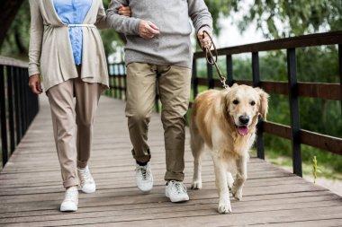 partial view of senior couple walking with golden retriever dog across wooden bridge in park