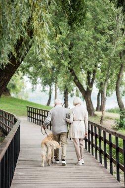 senior couple walking with golden retriever dog across wooden bridge in park