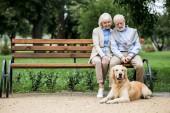pěkný starší pár sedí na dřevěné lavici a roztomilý pes ležící nedaleko vydlážděné chodníku