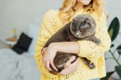 cropped view of girl in knitted sweater hugging adorable scottish fold cat at home