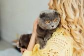 Hátulnézet lány kötött pulóver gazdaság imádnivaló skót Fold macska