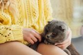 oříznutý pohled mladé ženy v pleteném svetru, který drží skotskou kocourku doma