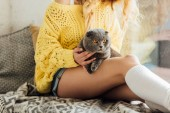 Fotografie cropped view of young woman sitting and hugging cutte scottish fold cat at home