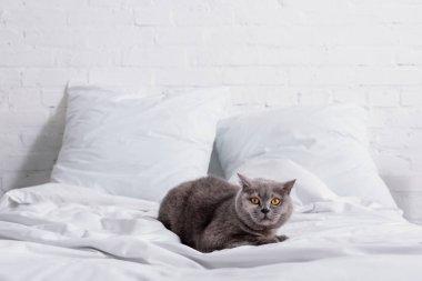 görünümü yatakta istirahat gri Britanya ile ilgili stenografi kedi kadar kapatın