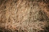 Fotografie full-Frame-Bild von Haufen von Trockenrasen Hintergrund