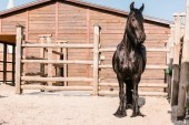 Fotografie front view of black horse standing in front of wooden fence in corral at zoo