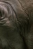 celý rám obrazu pozadí kůže bílých nosorožců