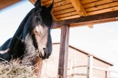 Fotografie low angle view of horse standing near dry grass in corral at zoo