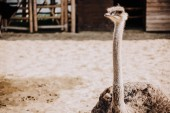 close up shot of ostrich standing in corral under sunlight at zoo