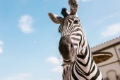 Photo low angle view of zebra muzzle against blue cloudy sky at zoo