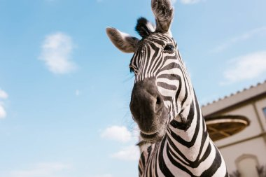 low angle view of zebra muzzle against blue cloudy sky at zoo