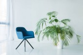 Fényképek belső nappali fotel és palm pot