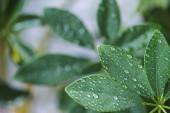 zár megjelöl kilátás a szobanövények, zöld levelek, és a vízcseppek elmosódott háttér