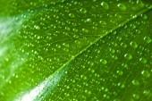 close up view of green leaf with water drops