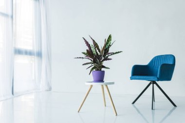 interior of living room in minimalistic design with armchair and calathea lancifolia plant in pot on table