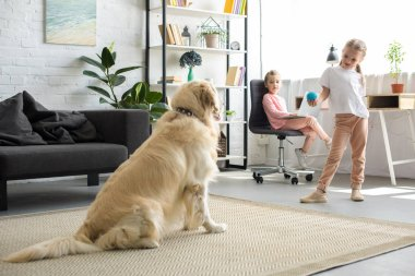 selective focus of little child playing with golden retriever dog at home