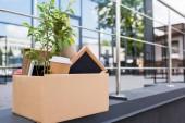 Fotografie Hrnková rostlina a kávu v pohárek v papírové krabičce na ulici nedaleko kancelářská budova