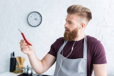 handsome bearded young man in apron and earphones holding chili pepper in kitchen