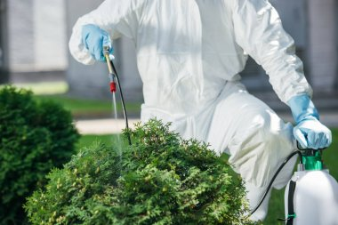 cropped image of pest control worker in uniform spraying chemicals on bush