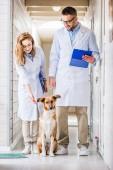 dva veterinární lékaři, stojí se psem v chodbě veterinární kliniky