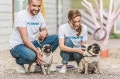 Fotografie two volunteers of animals shelter palming pug dogs