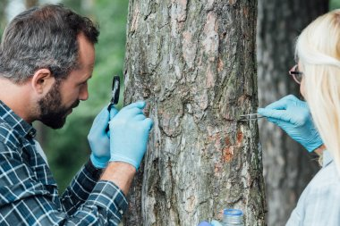 two colleagues scientists examining and taking sample of bark of tree outdoors