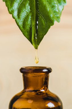 essential oil dripping from leaf into glass bottle isolated on beige