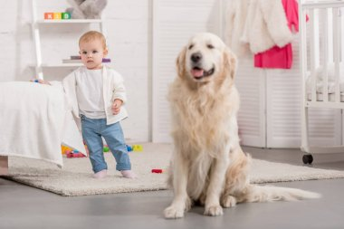 adorable kid and cute golden retriever in children room