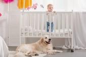 Fotografie adorable kid standing in crib, fluffy golden retriever lying on floor in children room