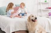imádnivaló gyerekek játék ágyon, Arany-Vizsla ül ágyas szobában gyermekek