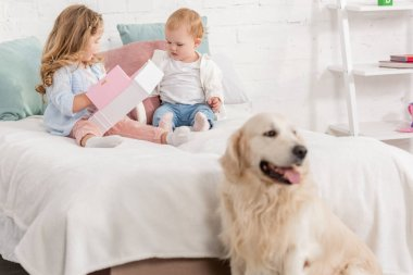 adorable children playing on bed, golden retriever sitting near bed in children room