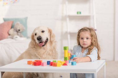 adorable kid playing with educational cubes, cute golden retriever sitting near table in children room