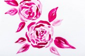 Fotografie Top view of pink watercolor flowers with leaves on white background