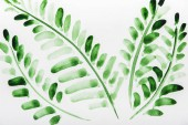 Top view of plants with green leaves on white background
