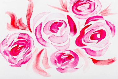 Top view of pink watercolor roses on white background