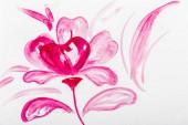 Felülnézet rózsaszín akvarell virág, fehér háttér
